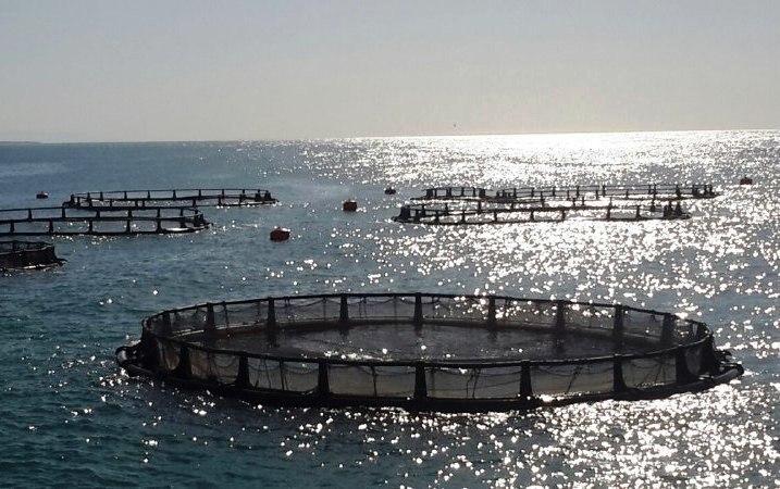 طرح توجيهي پرورش ماهی در قفس -فرصت سرمايه گذاري ١٢٣