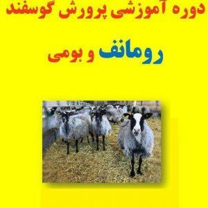 دوره آموزشی پرورش گوسفند رومانوف و بومی