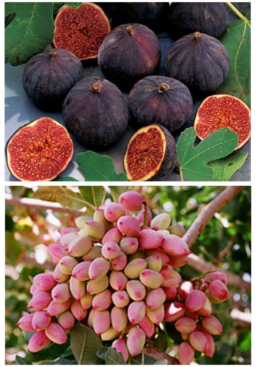طرح توجیهی بسته بندی میوه پسته و انجیر